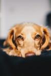Check Up With Blum: Coronavirus and Pets