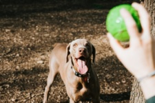 Top 5 Chicago Dog Parks