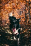 Autumn Safety Guide for Dogs