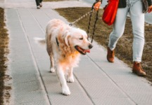 Dog Walking During Covid-19 by Nancy P.