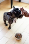 Which Food is Right For My Dog?