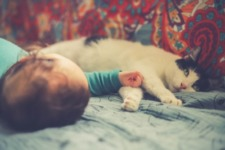 Kids and Cats: How to Introduce a New Child to Your Cat