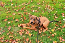 What Equipment Should I Use For My Dog? A Guide To Common Collars, Harnesses, And Leashes.