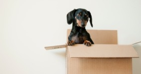 Home Sweet New Home: Moving With Your Pet