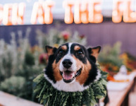 Chicago Dog-Friendly Breweries and Bars
