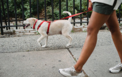 Dog Walking Etiquette for Cities